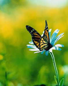 Открытка «Бабочка на цветке» » Сделай сам 96
