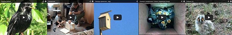 Подборка видео: скворечники, скворцы и другие птицы
