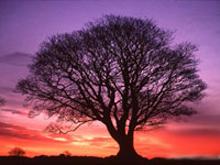 Дерево — ось мира