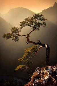 Древо жизни — лестница, соединяющая Небо и Землю