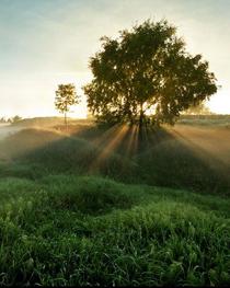 Каждое дерево имеет душу...