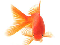 Фотографии Продам рыбу.